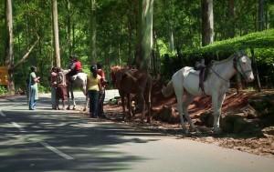 Kerala on map