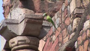 Qutb Minar Delhi - India.mp4.0016
