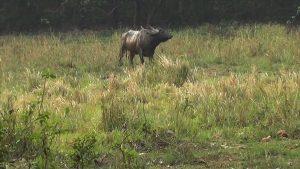manas national park (13)